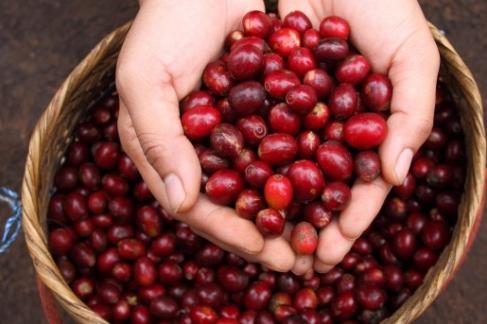 Cafea Costa Rica Don Chico