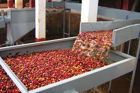 Cafea Honduras SHG