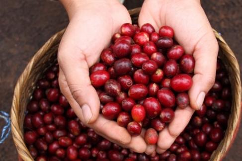 Cafea Kenia AA